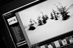 Lightroom Workshop Image